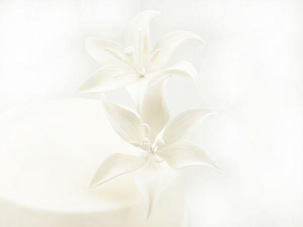 Feinzucker Blüten Tiger Lily White 2er