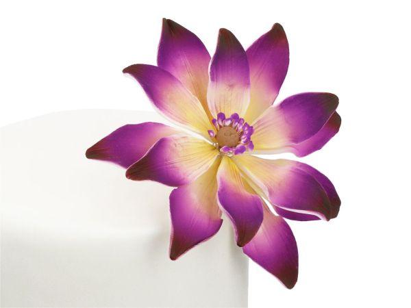 Feinzucker Blüte Tranquil Water Purple