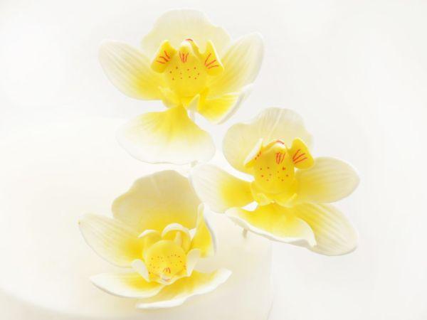 Feinzucker Blüten Moth Orchid 3er