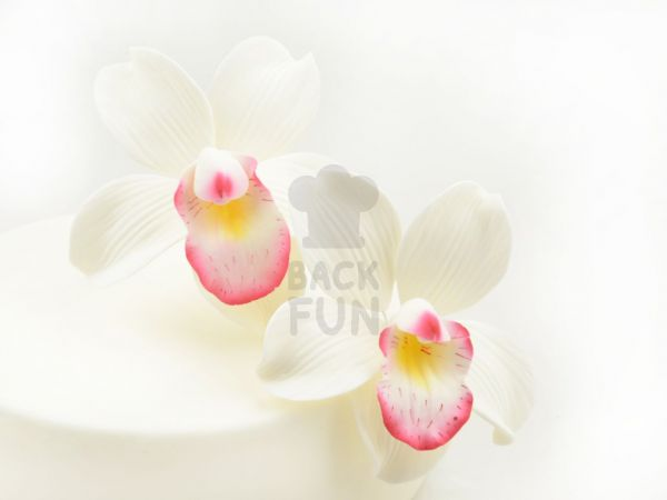 Feinzucker Blüten Cymbidium Orchid 2er